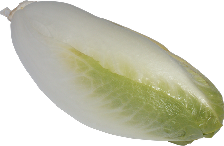 chicory-2200901_960_720.png